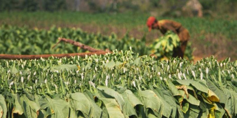 India: Farmers' body asks PM Modi to withdraw bill on cigarette, tobacco