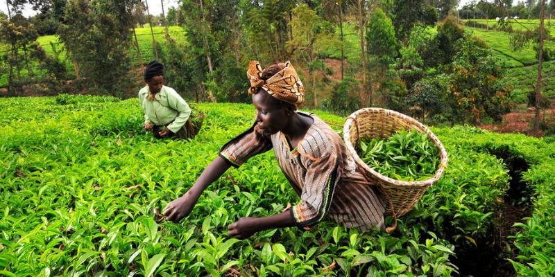 RBZ (Reserve Bank of Zimbabwe) throws tobacco farmers into vicious debt trap