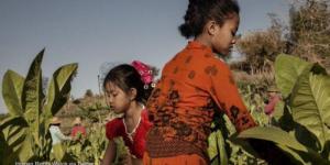 Opinion: Détourner le regard ne mettra pas fin au travail des enfants dans les champs de tabac